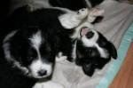 Unsere Puppies