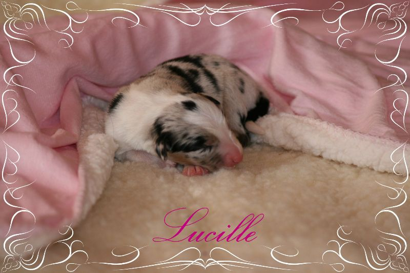 www.kizoa.com_djuna babys neu 15.05.2015 1873 lucille