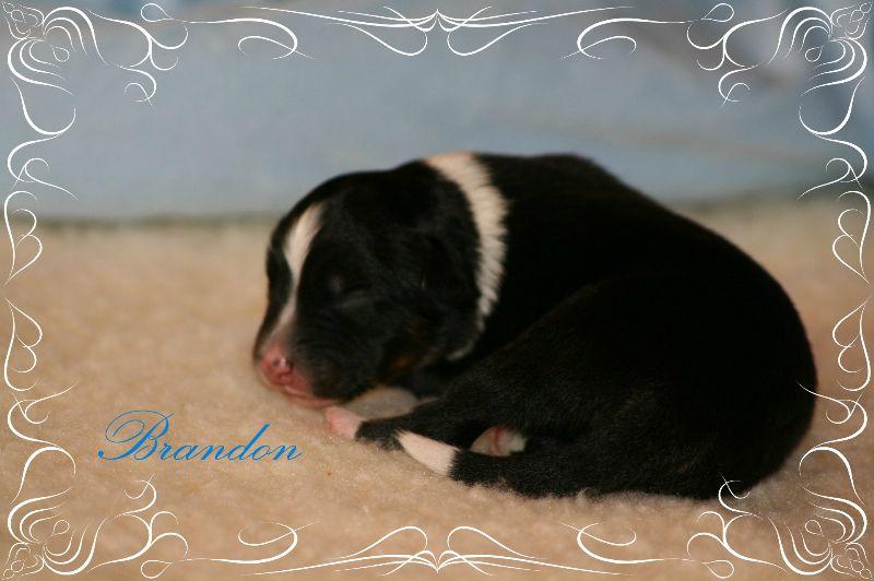 www.kizoa.com_djuna babys neu 15.05.2015 1938 brandon
