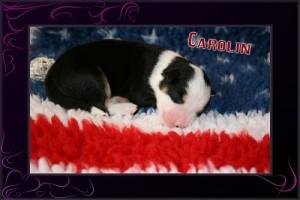 Carolin I