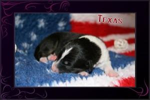 Texas I