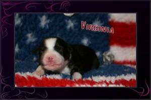 Virginia I
